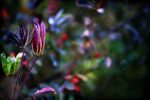 piccole mani d'autunno