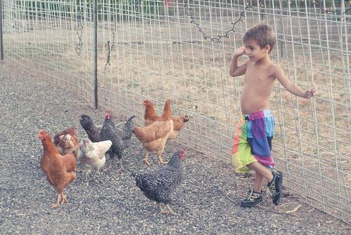 chickenherding-10