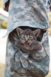 Celebrating the Hero Cat - trouser kitty