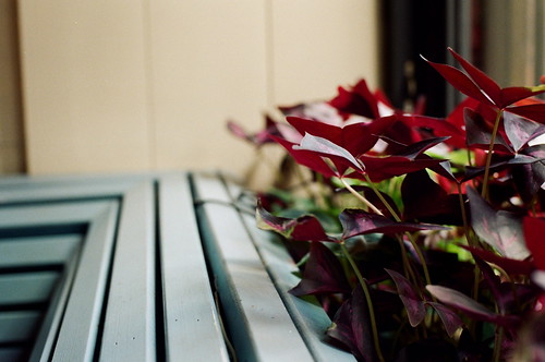 bench, window plants
