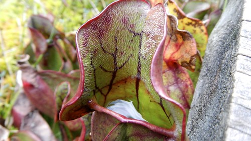 MUN Botanical Garden 17