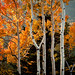 fall in colorado {explored}