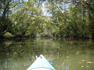 Paddling around the island on Saluda River