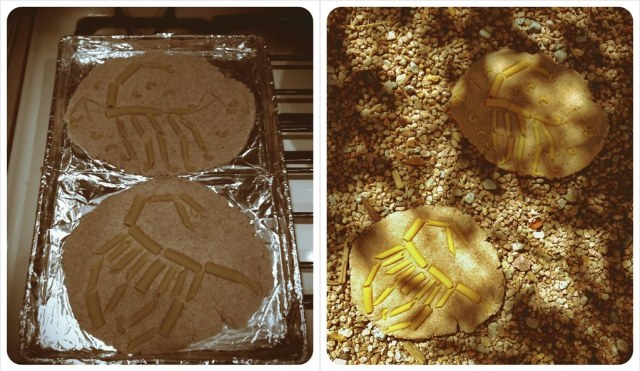 We baked them and they had a fossil hunt outside.