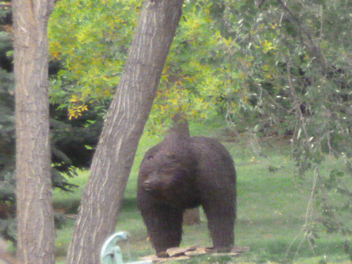 9-26-12 CO - Hewlett Gulch Hike31, Black Bear