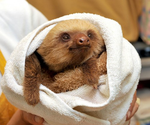 sloth_smile