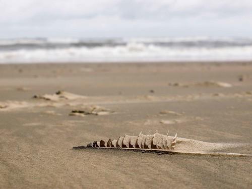 Strandfund