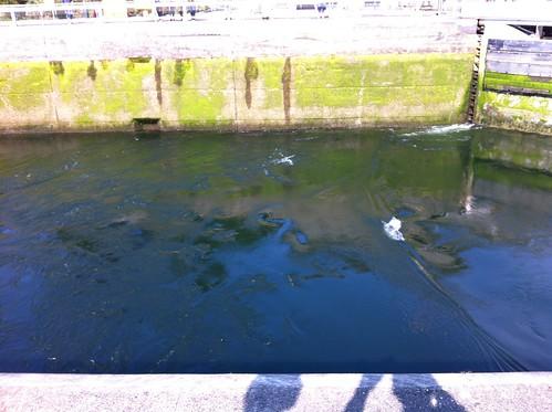 Rippling water in equalization basin at Chittenden Locks