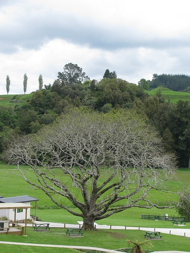 Tree near Waitomo by holidaypointau