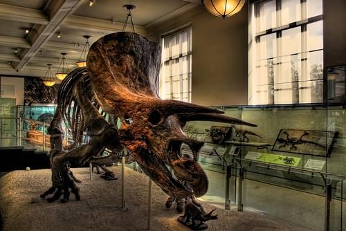 New York City USA - American Museum of Natural History - David H. Koch Dinosaur Wing - Triceratops horridus 03