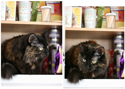 Tea Puff: Lucy in the tea cabinet