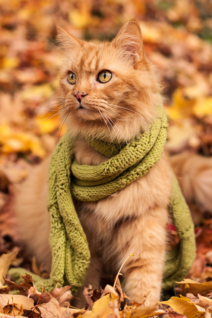 Autumn Puddy cat