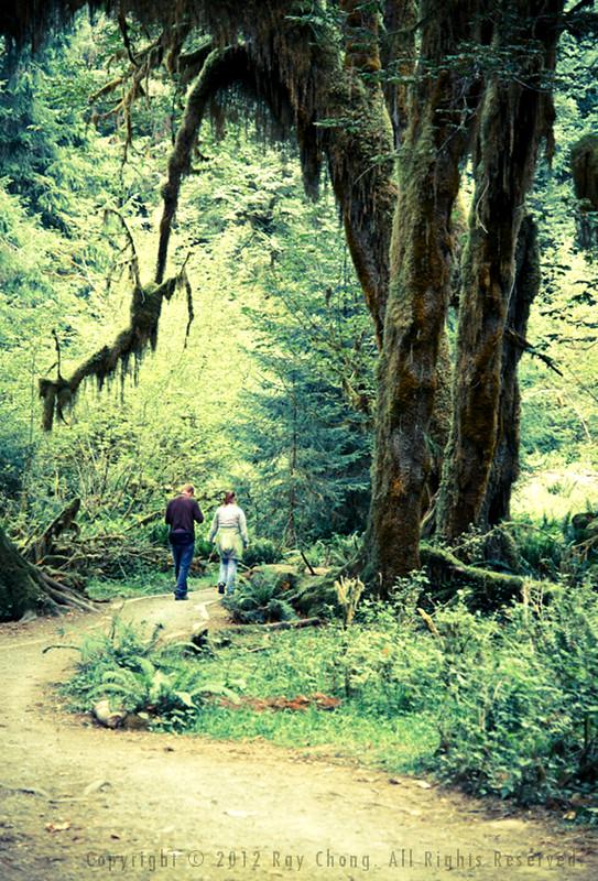Hoh Rainforest, 2012