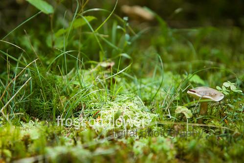 20120902-3lakes-66.jpg