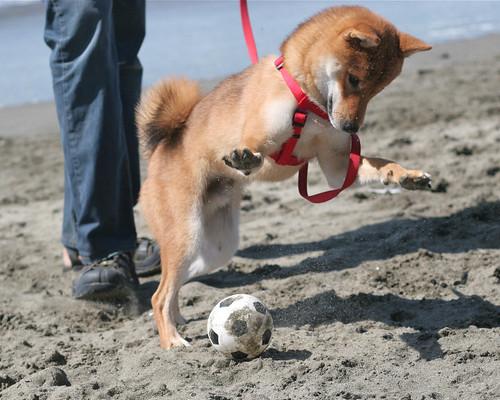 Tonka's gonna smash that ball