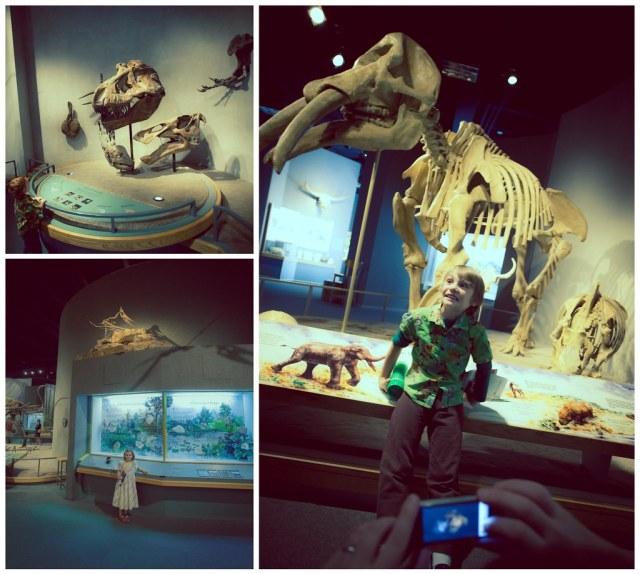 DMNS Prehistoric Journey