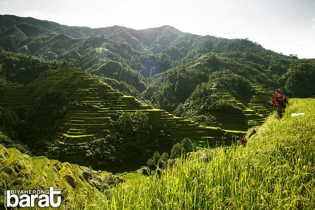 Walking in the rice fields NFA Banaue Rice Terraces