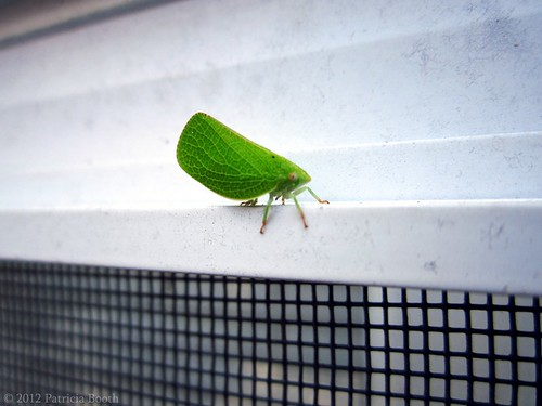 Day 242 Leafy Bug by pixygiggles