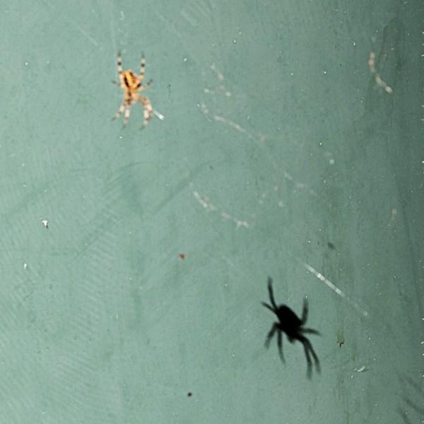 L'ombre de l'araignée