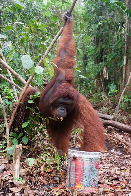 Orangutan World, Tanjung Puting Borneo Adventure-108.jpg