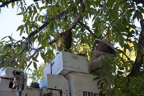 Mark up high at hive 5