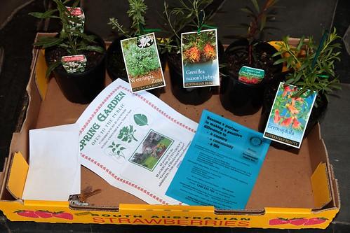 Five Plants for Twenty Dollars