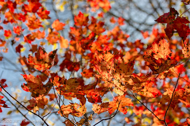 2012_Oct_17_Fall Foliage_022