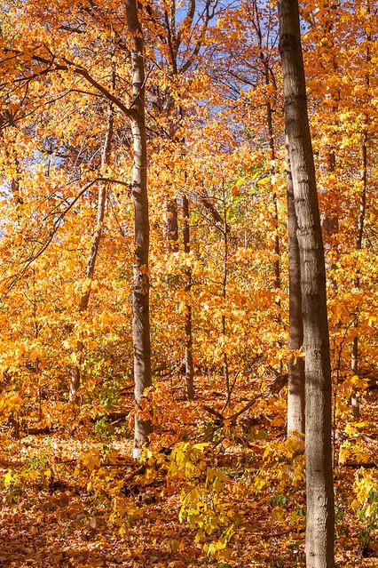 Autumn Walk V