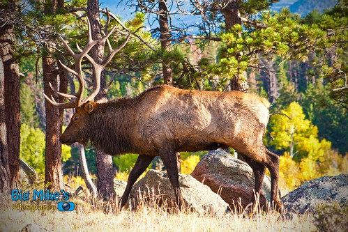 Big Elk 2012 by Big Mike's Photography