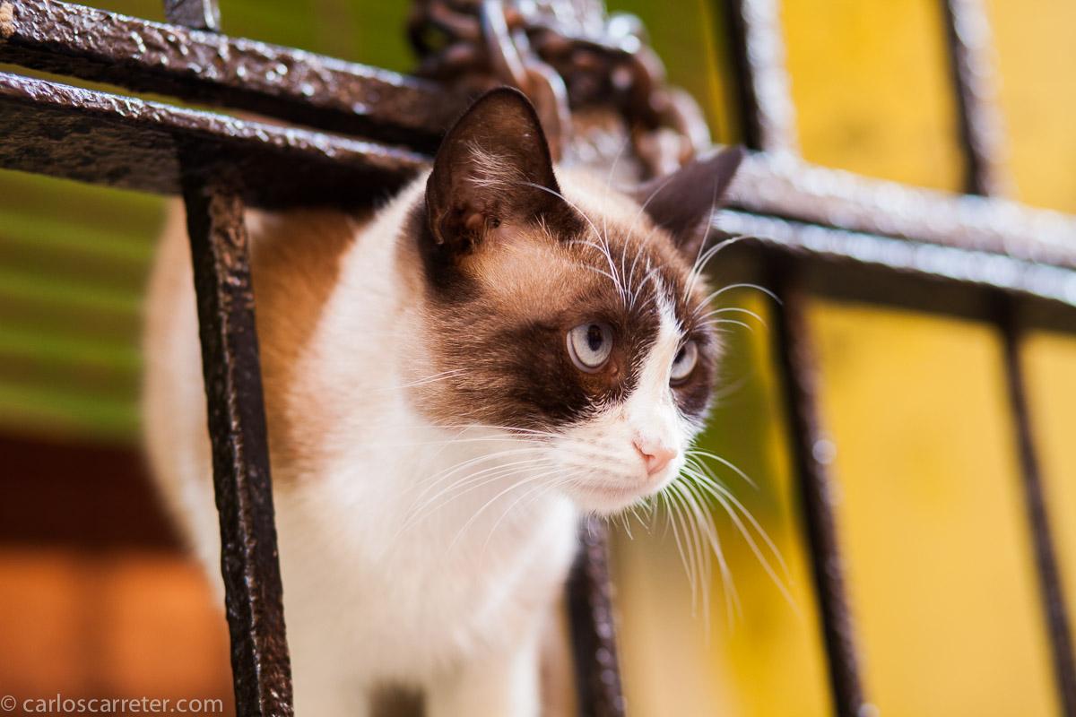Gato sobre ocres y verdes