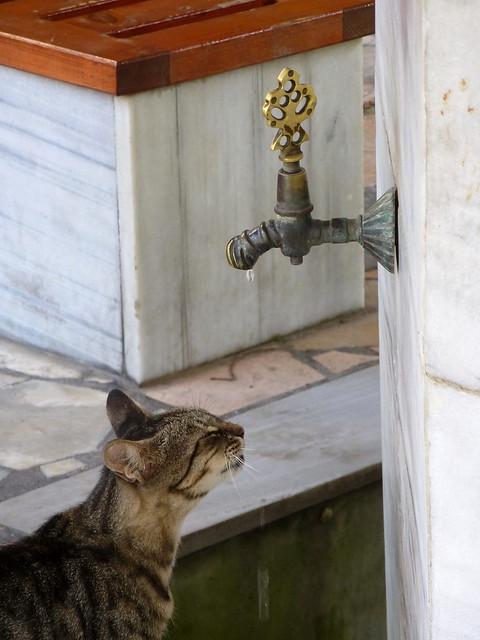 Turquie - jour 2 - Istanbul - 06 - Küçük Ayasofya Camii
