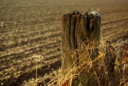 20121201-03_Rustic Fence_Cawston Rugby by gary.hadden