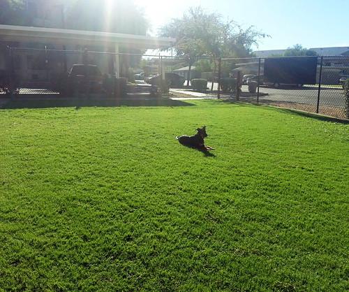 Blitz lying in grass