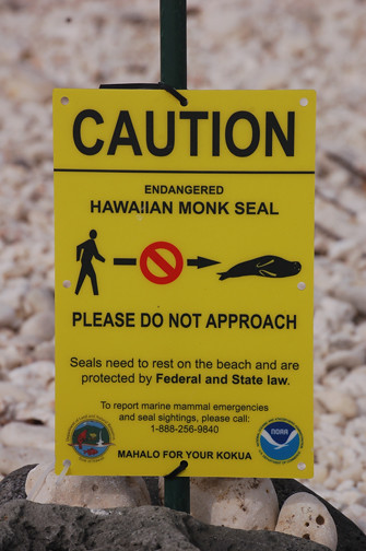 monk seal sign