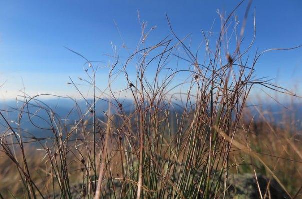 Alpine Grass Mt Lincoln
