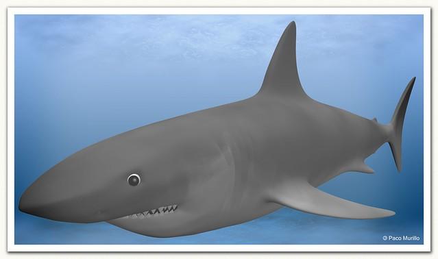 tiburón_3