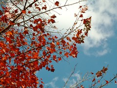 Foliage against blue sky