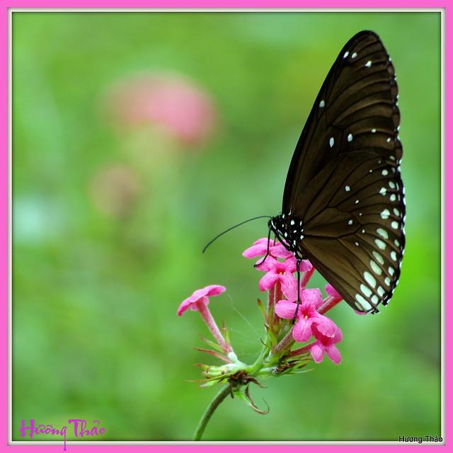 Butterfly in Tao Dan Park
