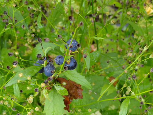 Autumn Fruits 01