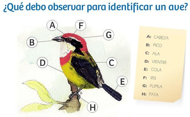 conociendo nuestras aves2