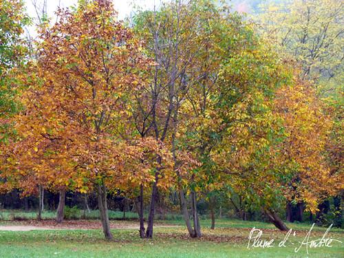 arbresautomne