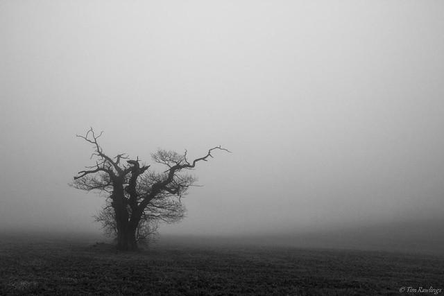 Foggy Day.....