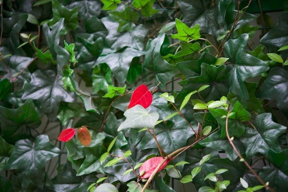 121027_coloredleaves