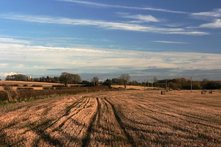 Field Tracks