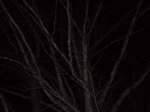 RSiegel_Week50 - Moonless maple tree