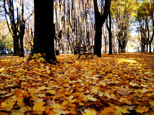 Monza park - autumn leaves