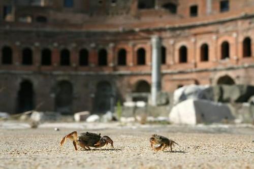 ROMA ARCHEOLOGIA / FORO DI TRAIANO: «Qualche anno fa vedevamo spesso dei custodi con buste piene di granchi giganteschi per farci la zuppa…>> di Dott. R. Meneghini, Comune di Roma (10/2012). by Martin G. Conde