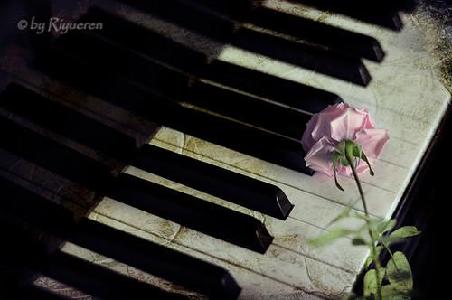 Armonia di rosa