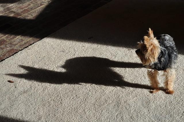 Nikki's Shadow