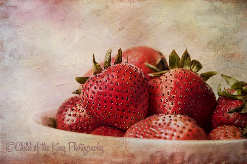 Berries by Child of the King Photography